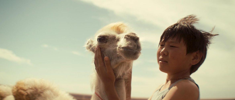 Celestial Camel Jury Feting